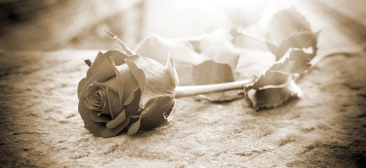 Rose in the ligt