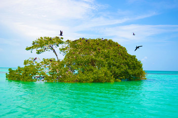 Flock of birds on the trees in the middle of the emerald sea