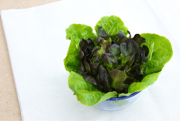 Romaine Lettuce and Purple Lettuce in Glass on Calico