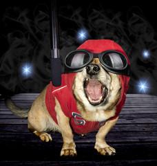 singer dog