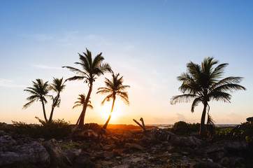 Tropical palm trees on sunset