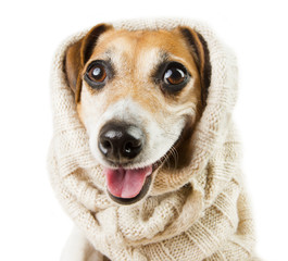 Cute dog smiling in a headdress