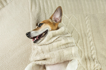 Cute dog smiling in knitted scarf lying on the bed