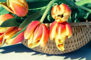 tulips in wooden basket