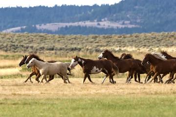 Nice herd gallops in the dust