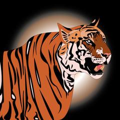 bengal tiger illustration night