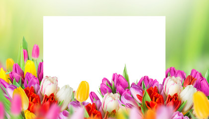tulips over blurred green background