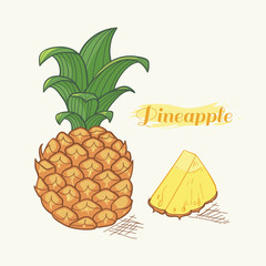 Hand drawn ineapple in vector