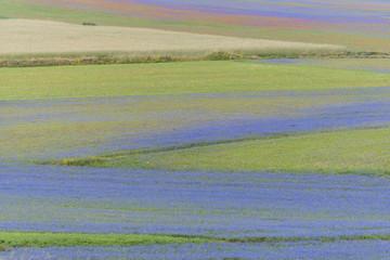 Colored fields in Piano Grande, Monti Sibillini NP, Umbria, Ital
