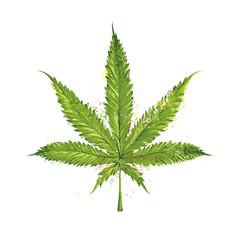 Vector Marijuana Leaf