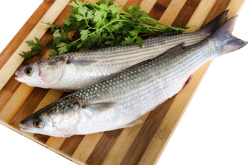 Fresh sea grey mullet with parsley ready to cooked