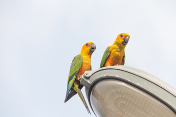 Parrot on lamps