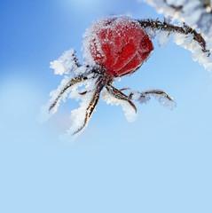 frozen hips - winter