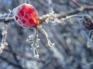 frozen hip - winter