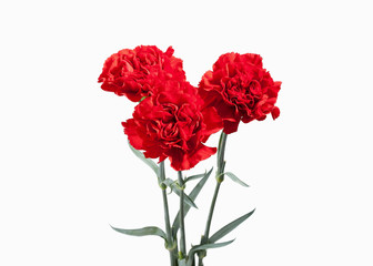 Flower. Red carnations bouquet