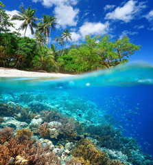 Coral reef in tropical sea.
