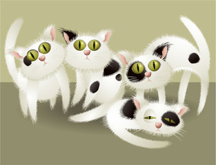 White cute cats