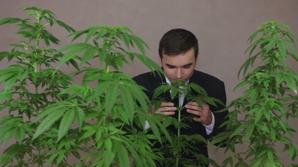 Happy business man with Cannabis plants