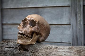 The skull on old wood.Still Life