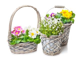 Frühlingsdekoration, Blumenschmuck