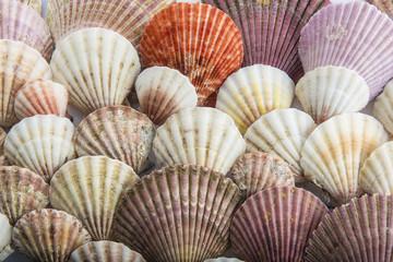 Fondo con textura de conchas vacaciones verano playa