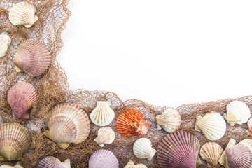 Fondo verano con conchas y espacio en blanco para texto