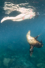beautiful mexican girl and sea lion underwater