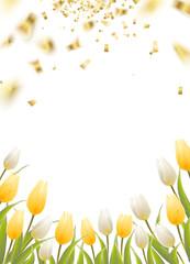 Tulip spring flowers.
