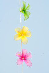 Bunch flowers