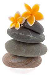 fleurs de plumeria sur galets superposés .
