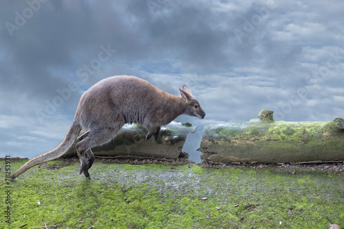 Deurstickers Kangoeroe kangaroo while jumping on the cloudy sky background
