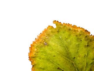 Grunge Green Leaf
