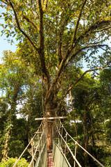 Canopy walk at gunung mulu national park