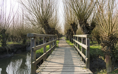 wooden bridge in nature with willows
