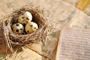 Tiny bird nest and a handwritten letter on an old map