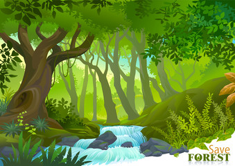 Water stream in lush green tropical rainforest