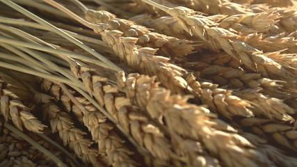Spikes, Grain and Flour