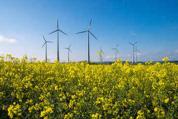 Rapeseed field with wind engines in the back