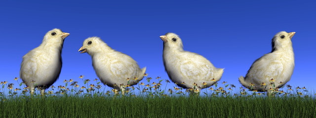 Chicks - 3D render