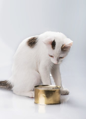 kitten with canned