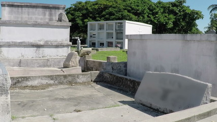 FL Key West Grave yard Iguanas