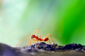 walking ant on a wall