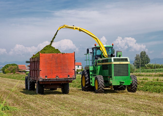 Harvester cutting field and loading into a Tractor Trailer