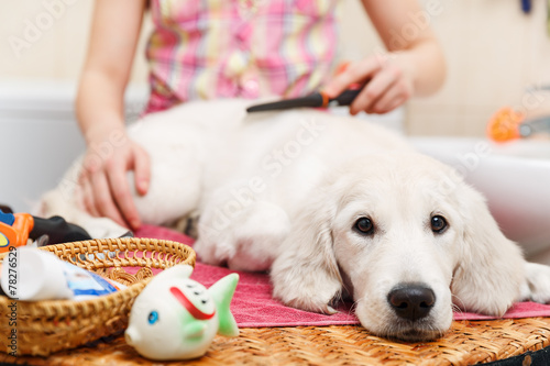 Girl grooming of his dog at home - 78276529