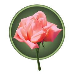 picture of pink rose in a round frame