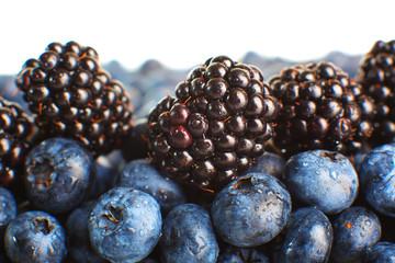 Freshly picked blueberries. Macro