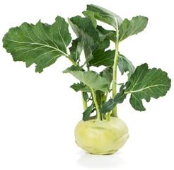 Kohlrabi  (Brassica oleracea L.)