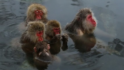 さるの親子 Snow Monkey Onsen Family