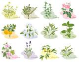 Fototapety アロマ 植物 いろいろ