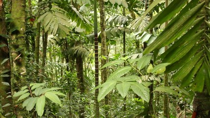 Interior of tropical rainforest, Ecuador